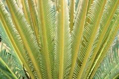 Fougère verte d'arbustes de jardin de fougère Texture de fond Photographie stock