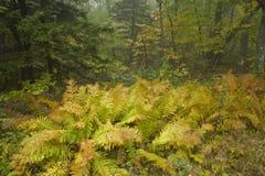 Fougères, automne, Ridge bleu Pkwy photographie stock libre de droits