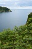 fougères côtières Photo stock