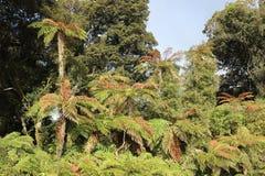 Fougères d'arbre parmi des arbres un jour ensoleillé Photos libres de droits