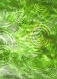 Fougères dans l'eau avec des ondulations Photo stock