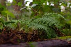 Fougères dans une forêt au Japon photographie stock libre de droits