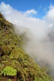 Fougères de forêt et d'arbre de nuage Photographie stock libre de droits