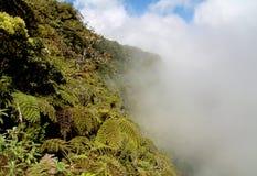 Fougères de forêt et d'arbre de nuage Photographie stock