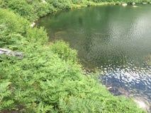 Fougères de lac Photo stock