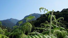 Fougères de montagne et ciel bleu Image libre de droits