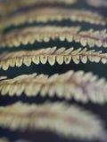 Fougères de région boisée dans des couleurs de chute d'automne Photos libres de droits