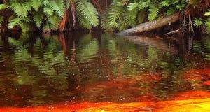 Fougères en rivière d'or Images libres de droits