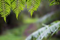 Fougères ensoleillées surplombant la traînée de forêt Photo libre de droits