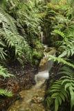 Fougères et écoulement d'eau, Pérou Longue exposition photo stock