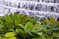 Fougères par des cascades à écriture ligne par ligne Image stock