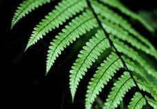 Fougères vertes fraîches Photographie stock libre de droits