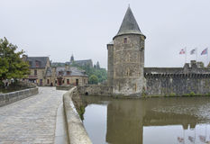 Fougeres Royalty-vrije Stock Foto's