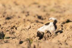Fouilles de chien un trou - Jack Russell Terrier Le chien est 4 années image stock