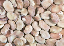 Foul beans. Image of dried foul beans Royalty Free Stock Photos