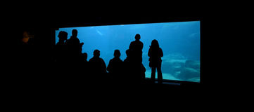 Foule à l'aquarium Photographie stock libre de droits