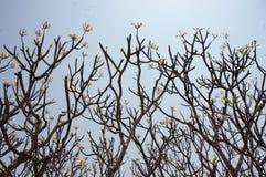 Foule d'arbre sur le fond nuageux de ciel bleu Image libre de droits