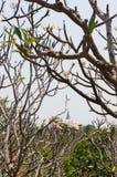 Foule d'arbre sur le fond nuageux de ciel bleu photos stock