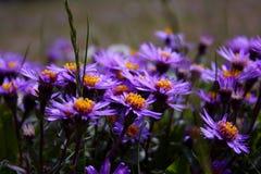 Foule de fleur Image libre de droits