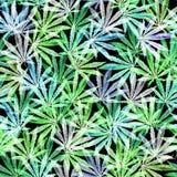 Foule des feuilles de cannabis sur le fond noir image stock