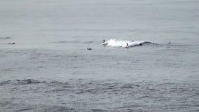 Foules de longboarder de surfers attendant dans la ligne pour attraper la vague de rupture dans le surfspot populaire sur Bali Fo banque de vidéos