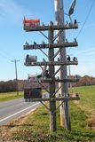 Whimsical towering pole filled with mail boxes. Found along a country road this whimsical towering mail box station has junk mail, fan mail, email, air mail and royalty free stock photo