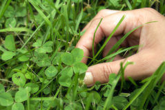 Found a Four Leaf Clover. A woman points out a four leaf clover in the patch stock photography