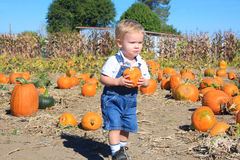 Found One. Cute toddler boy finding his first pumpkin while walking through a pumpkin patch Stock Images