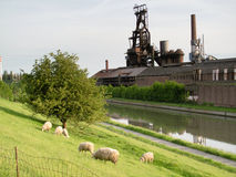 Foundry of Clabecq,near Tubize. And nice sheeps royalty free stock photos