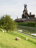Foundry of Clabecq and nice sheeps. Vertical view royalty free stock images