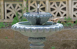 Fountain Bird Stock Photography