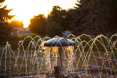 Fountain with bird turtledove. Sunset against the background of drops of water from the fountain and the turtledove sits Stock Images
