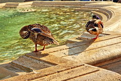 Fountain birds Vatican Royalty Free Stock Images
