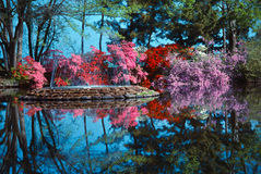 Fountain on calm pond. Calm pond with fountain surrounded by blooming azaleas stock photo