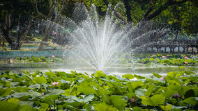 fountain in the center of lotus, in the garden Royalty Free Stock Image