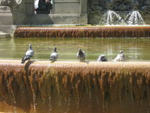 Fountain in the central square. Birds on a summer break royalty free stock images