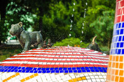Drops of water on a colorful fountain with a small dog Stock Image