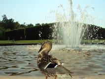 Fountain at Drottningholm Gardens, Sweden stock images