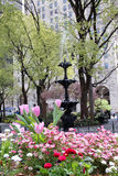 Fountain and flowered bed on Madison Square royalty free stock photography