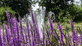 FOUNTAIN FLOWERS. FLOWERS IN THE FRONT OF THE FOUNTAIN royalty free stock image