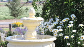 Fountain Flowing With Daisy Flowers Stock Photos