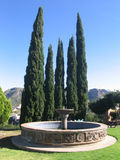 Fountain in Guanajuato. Tall pine brush in foreground with water fountain in front Royalty Free Stock Photo