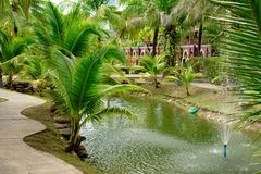 Fountain in the lake next to palm trees on the banks. A large number of tropical greenery around the lake with a fountain on the background of houses and paths stock images