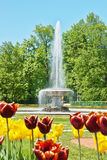 Fountain in lower park, peterhof, russia Stock Photo