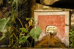 Fountain, Minerva `s garden. Salerno. Italy. The fountain with the Colocasia. Minerva `s garden. Salerno. Italy royalty free stock photos