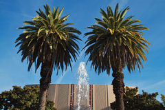 Fountain palms Stock Photo