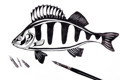 Fountain pen with ink drawing fish. Fountain pen with drawing perch on the white background. Fountain pen and different kinds of metal nibs pen on the white Royalty Free Stock Images