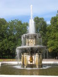 Fountain in Petergoph, Russia. Stock Image