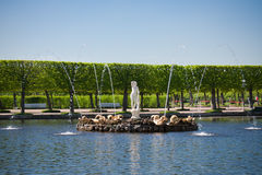 Fountain in Peterhof Park Royalty Free Stock Photography