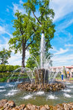 Fountain in Peterhof Park Stock Photos